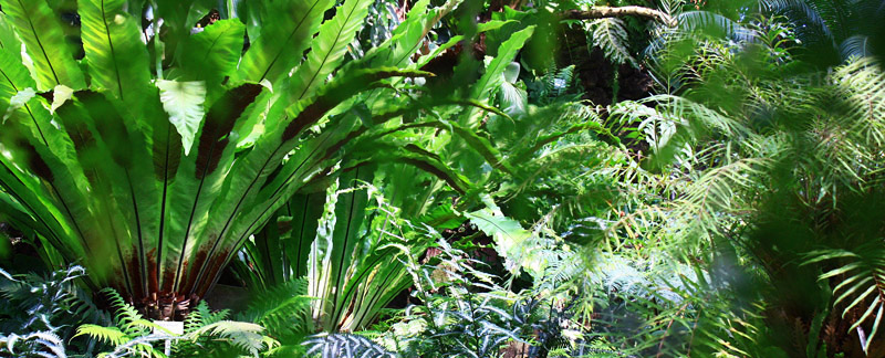 Green Parrot Gardens | Why You Need a Garden Designer | Ferns