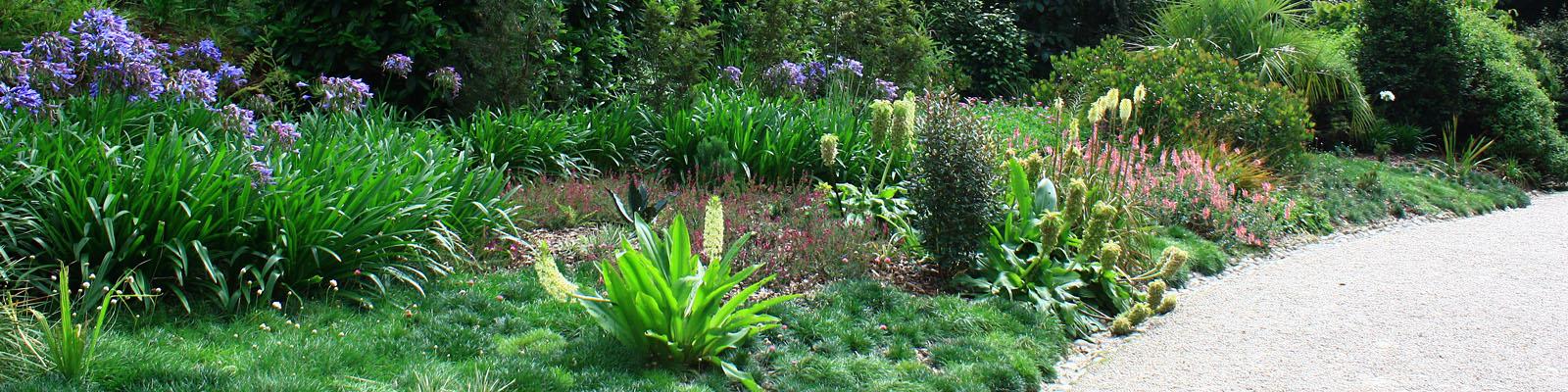 The Green Parrot's Garden Blog
