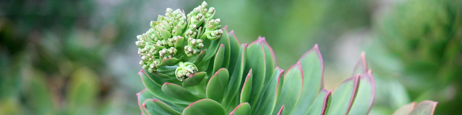 Green Parrot Gardens | Creative Approach | Succulents