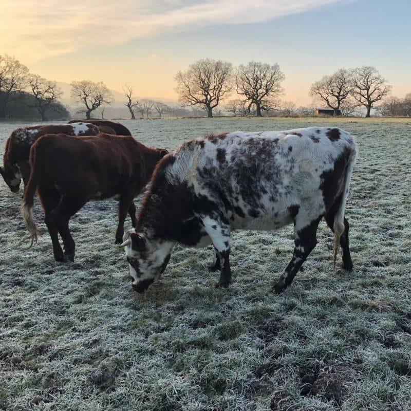 5 Reasons to Buy Grass-Fed Beef in the UK