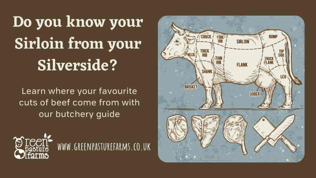 Where do all the different cuts of beef come from?