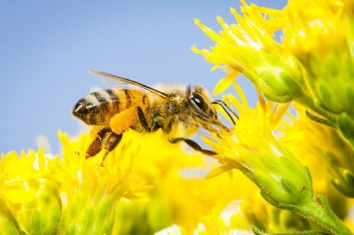Image result for save the bees greenpeace