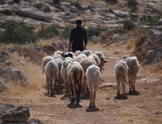 A Shepherd's Life …