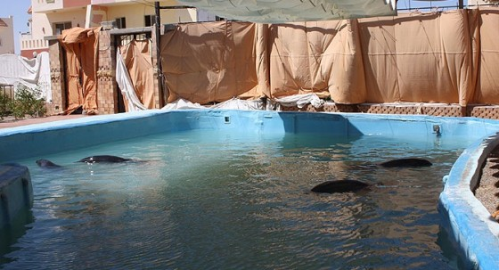 dolphin egypt