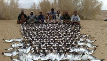 Arab hunting stopped in Pakistan