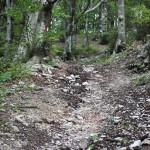 Sentiero 33 - Risalita al colle Muccicchioso