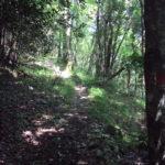 Sentiero 241 - Inizio del sentiero quasi in piano...