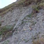 Falesia Miocenica