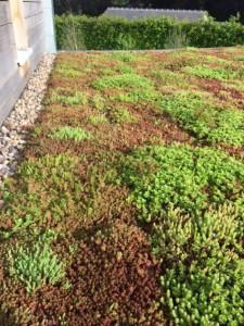 Green roofs naturally 4 may 16