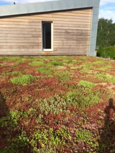green roofs naturally May 16