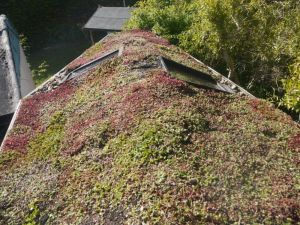 After Green Roofs Naturally