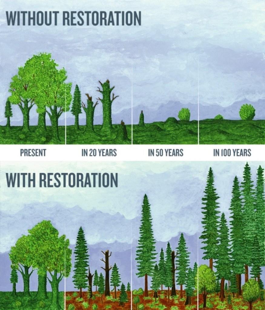Parks_Restoration