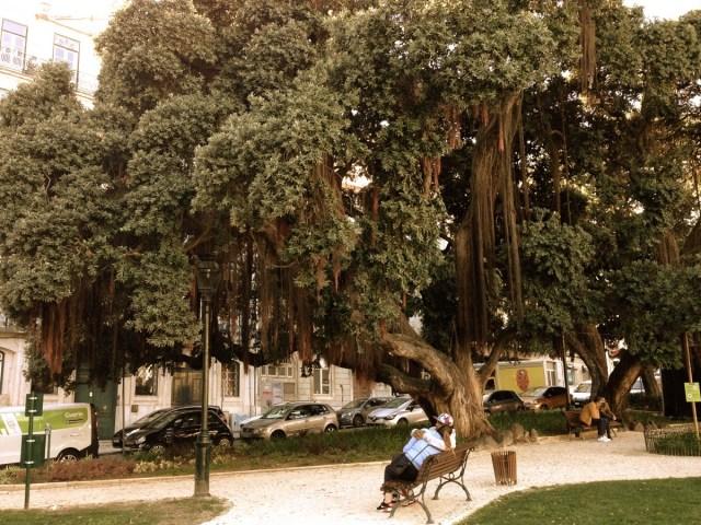 Gemütlichkeit im Bairro Alto in Lissabon: Hier am 'Jardim do Príncipe Real', ein grüner Platz im Herzen der Oberstadt von Lissabon.