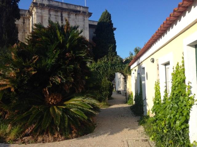 Baumfarne und Efeu im Garten hinter dem Wassermuseum (Museu da Água) im Straßenbezirk Largo do Rato in Lissabon.