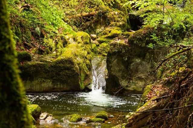 Ein Wasserlauf in einem Wald. Bild von marcelkessler auf Pixabay