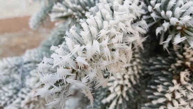 Längliche, nadelförmige Eiskristalle  (Bild von MrsGromi auf Pixabay.com).