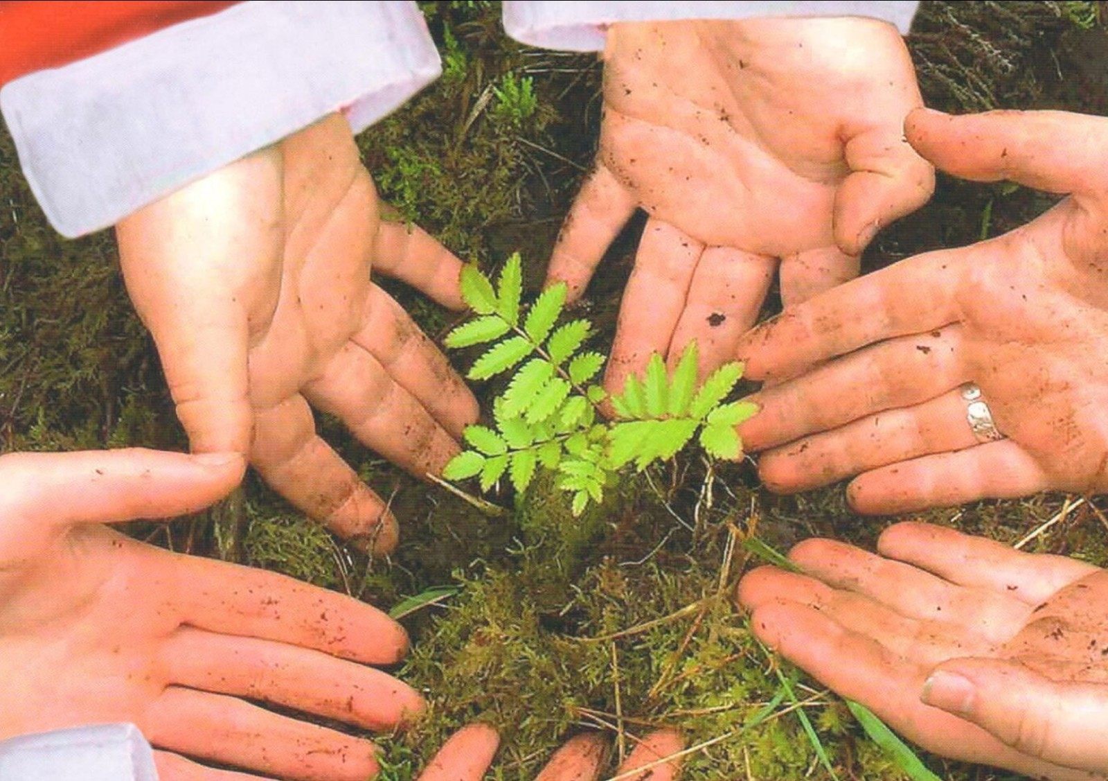 hands with christmas cuffs showing a tree sapling in the middle