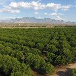 GVPC orchard 2016