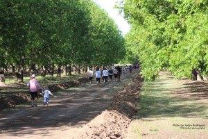 Orchard Series Nut Run