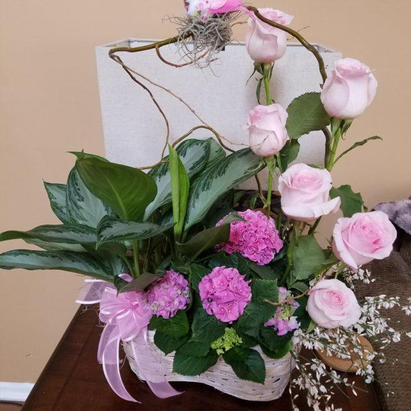 187 Mom S Favourite Plant