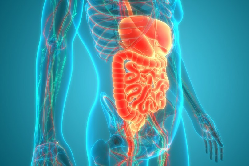 Microbiote système gastro-intestinal