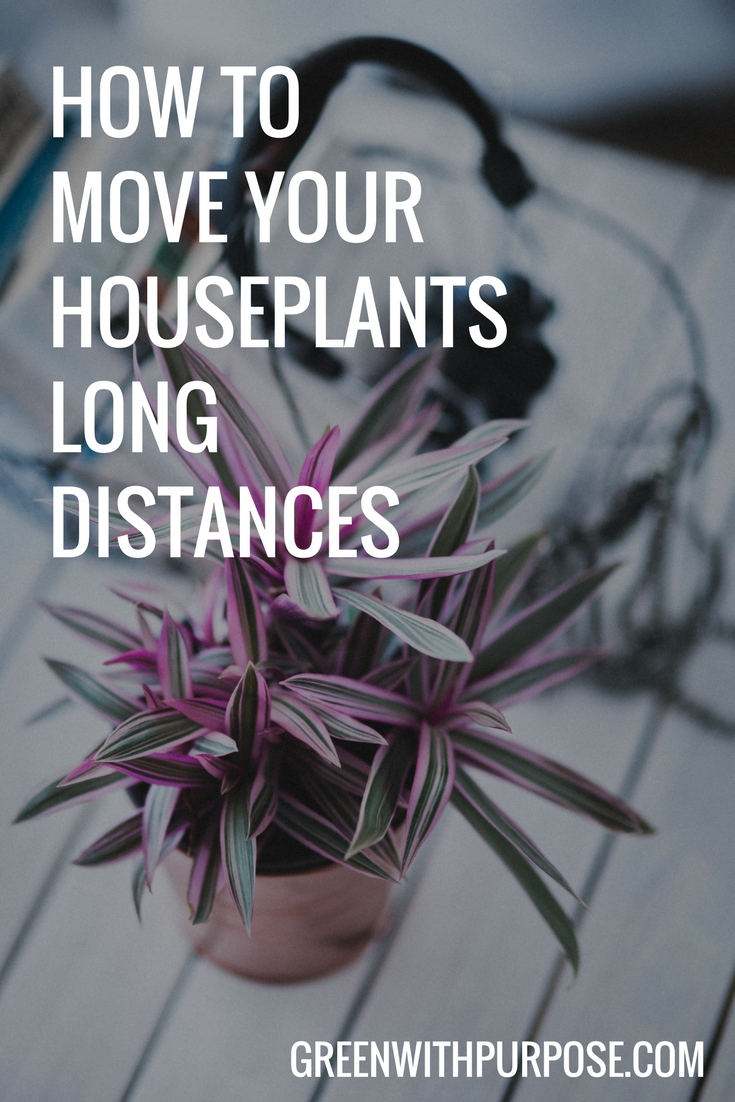 How to move your houseplants