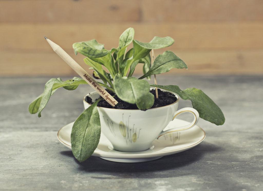 Sprout Plantable Pencil2