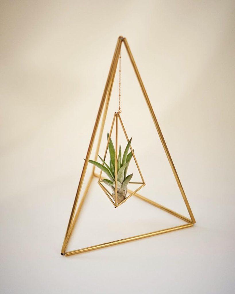 Tetrahedron No02 and tillandsia brachycaulios abdita by Fuxigold