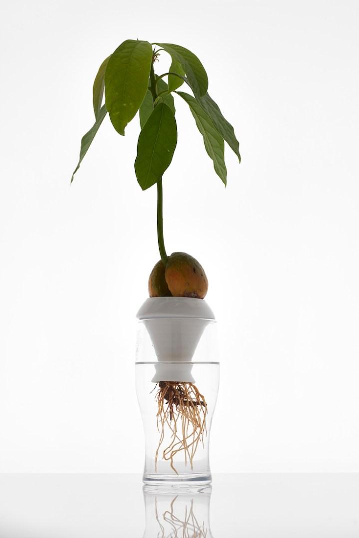 Plantation Series 3 (ceramic plant propagation) by Alicja_Patanowska