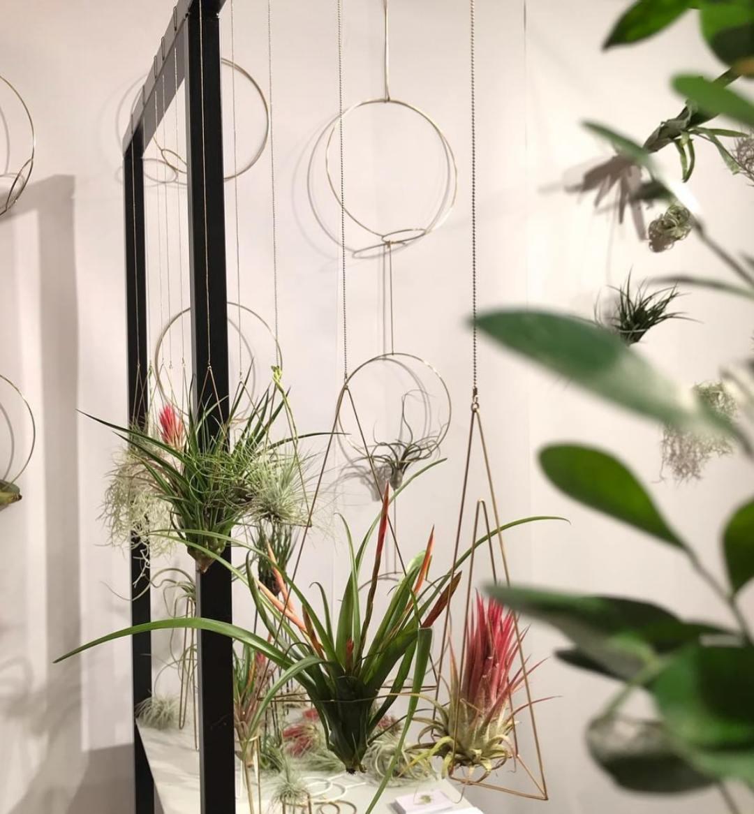 Airplant hangers by Studio Hali-Ann Tooms