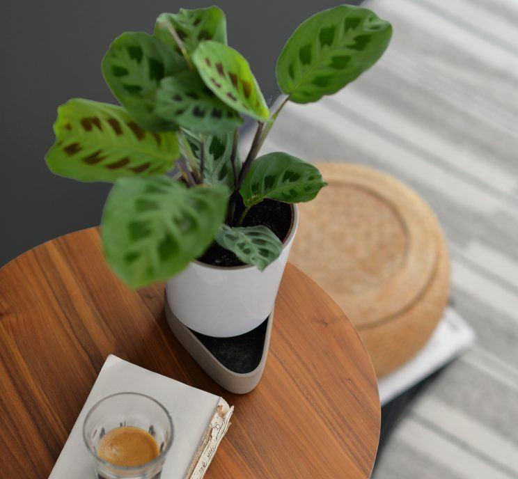 The Sip by Ann Kristin Einarsen for Case Furniture