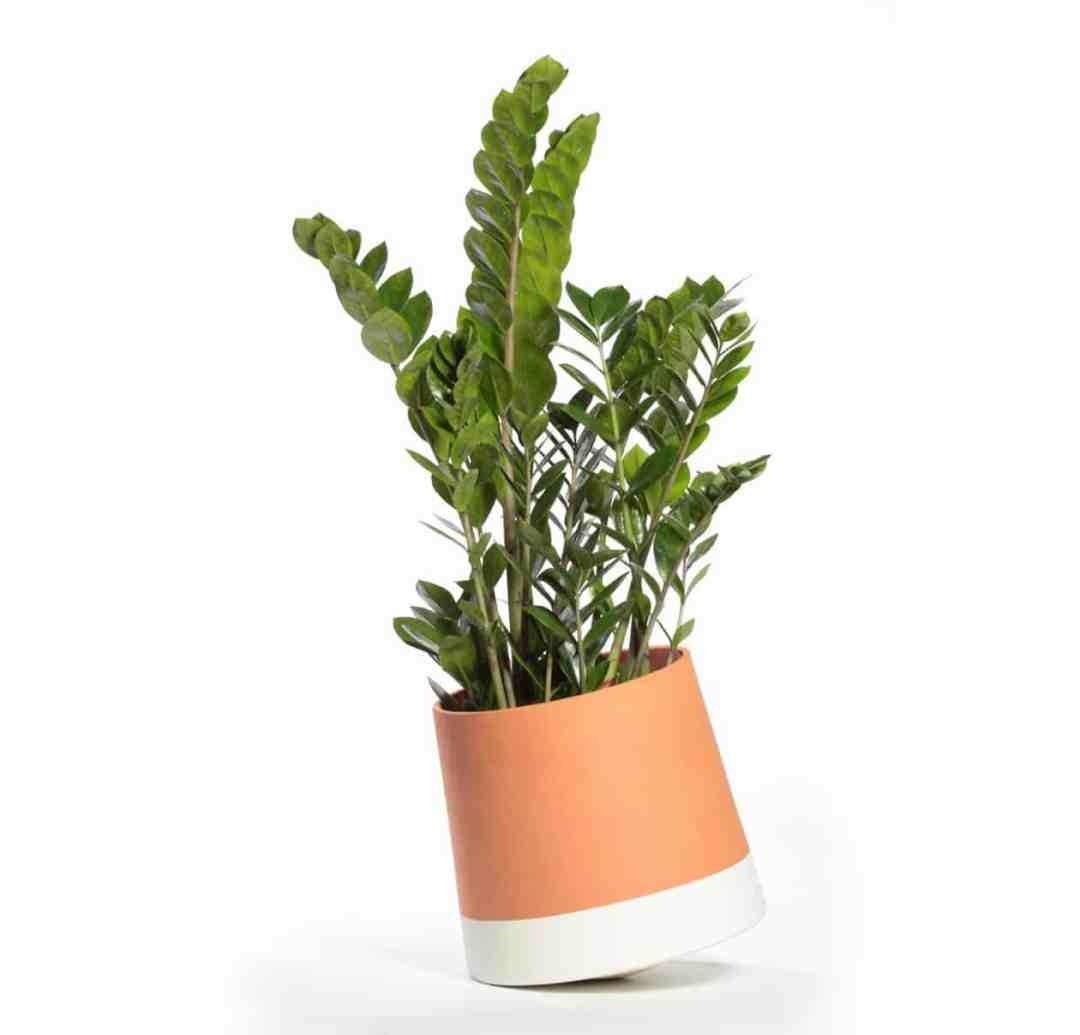 ZZ plant in Voltasol flower pot by We Are Living Things