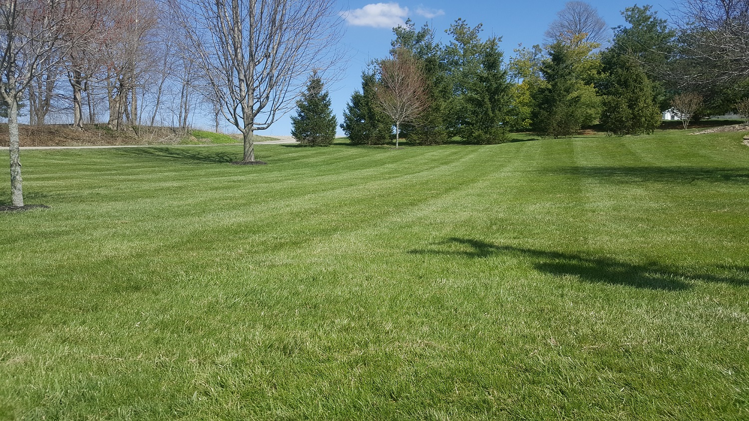 Lawn Fertilization Programs
