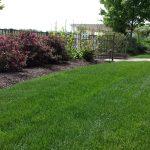 Lawn Programs
