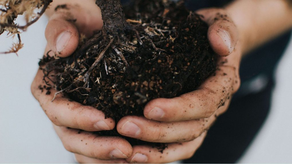 , Sustainable Gardening – Avoid Chemical Herbicides, Greenworks Tools, Greenworks Tools