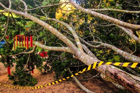emergency tree services by Green Works Tree Care