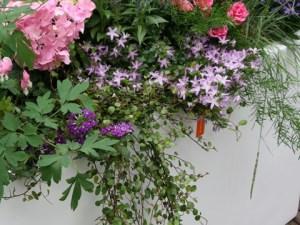 Weederige border in een bloempot