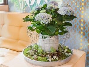 Magical hortensia voor binnen