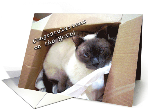 Congratulations On The Move Into New Home Siamese Cat In