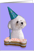 Bichon Frise Birthday Cards From Greeting Card Universe