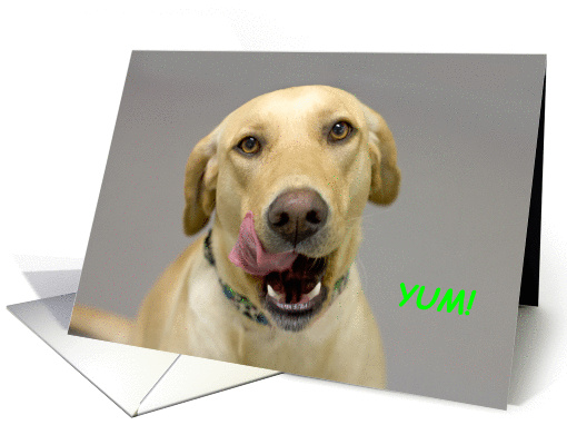 Yellow Lab Birthday Card By Focus For A Cause Card 1111000
