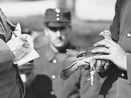 Swiss Army dispatching a message by carrier pigeon during WWI Swiss Federal Archives Photographer unknown Restoration by Adam Cuerden