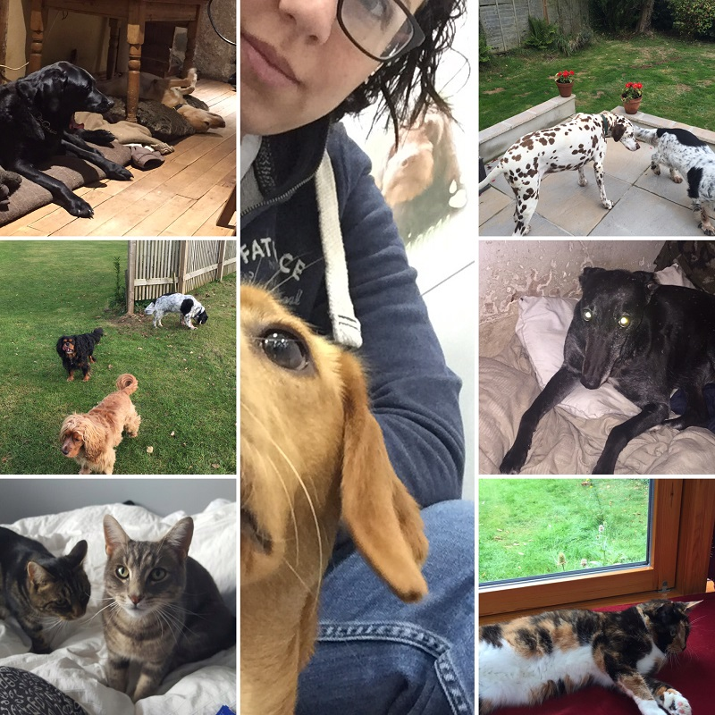 Some of the lovely pets we have looked after on our house and pet sitting adventures
