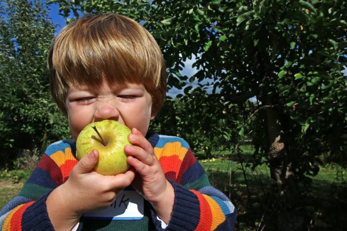 patterson-fruit-farm-2016-1