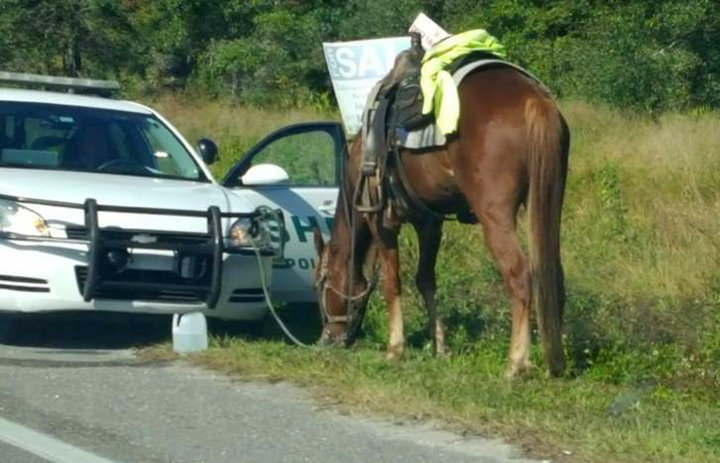 Horse DUI Lawyer