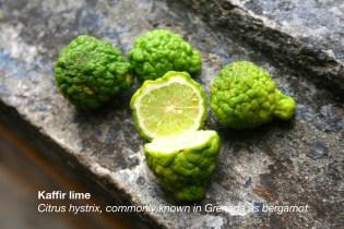 Kaffir-lime2