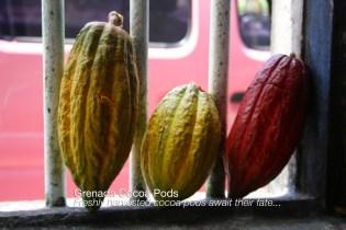 cocoa-pods (1)