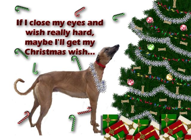Greyhound Occasion Greeting Cards