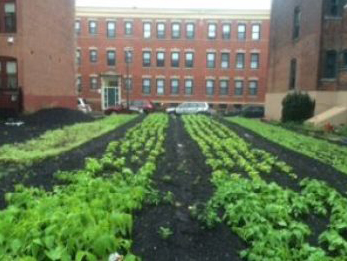 One of NUBIA's nine urban agriculture plots in Boston, Mass (submitted photo).