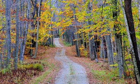 """Country Road,"" by Robert Watroba; photo courtesy Berkshire Art Association"